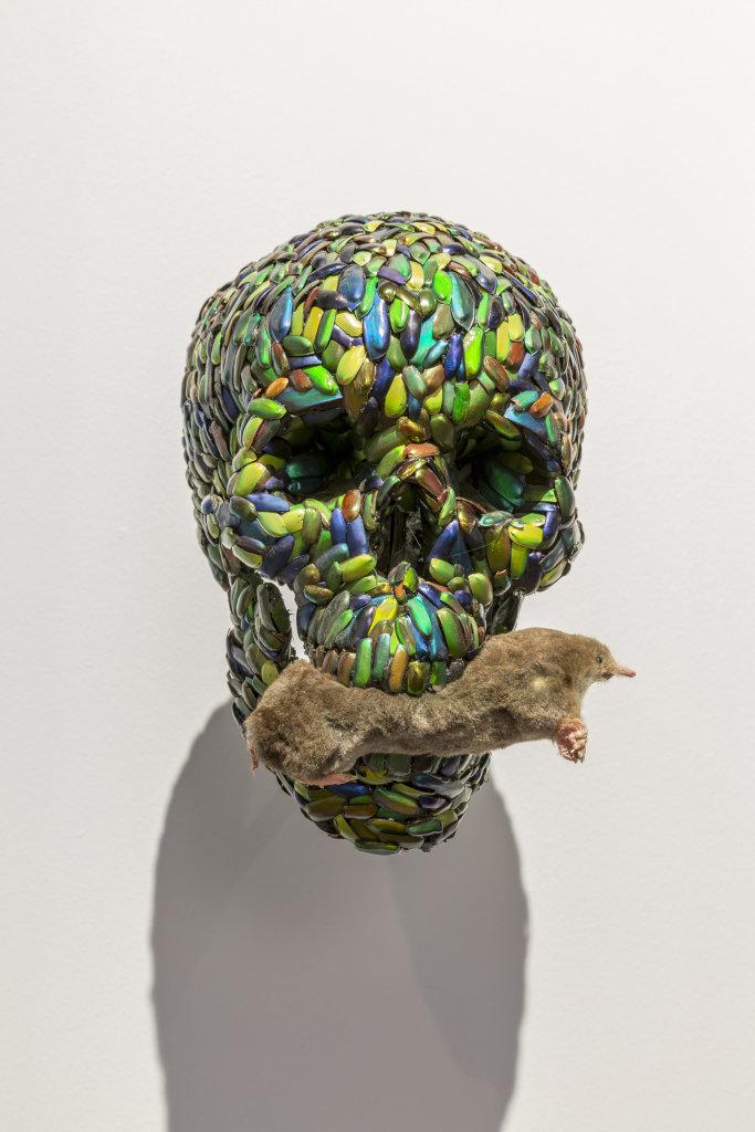 Jan fabre - Exposition A poils et a Plume, L'odysee des animaux II au Musee de Flandre de Cassel