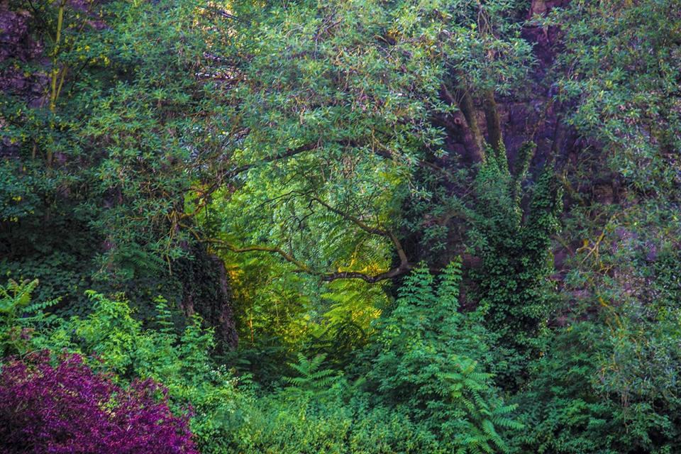 Mélodie Daumas, Amazonie parisienne, 1er prix du concours Wipplay, Jardins Extraordinaires, Jardin du Luxembourg