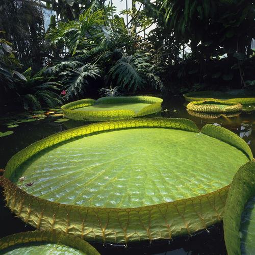 Jean-Baptiste Leroux, Parc du moulin à Tan et serres tropicales, Paris, Jardins Extraordinaires, Jardin du Luxembourg