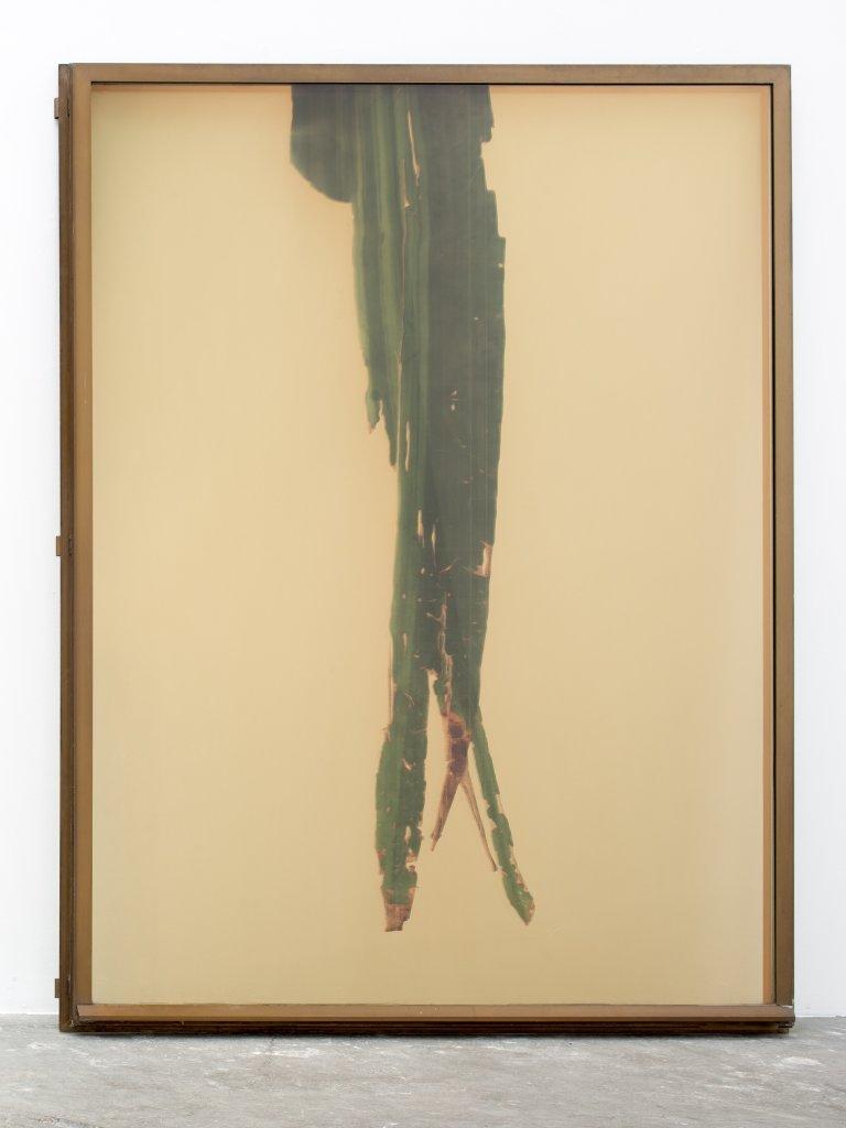 Adrien Missika, Botanical Frottage (Clara), 2014 - Le reve des formes au Palais de Tokyo