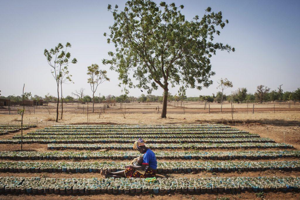 Agroecologie au Sahel - Exposition Empreinte au Pavillon de l'Eau