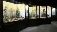 Museum d'histoire naturelle de Blois, nuit des musees 2017
