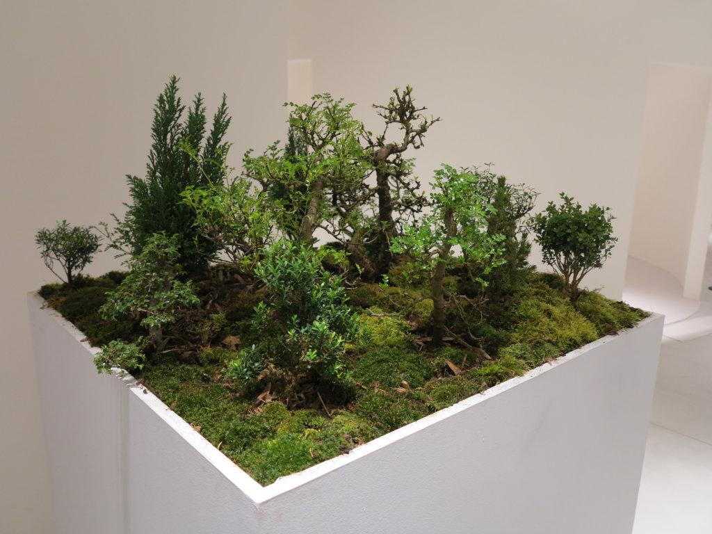 SUMA Cécile Beau 2010 - sculpture ; structure bois, végétation diverse, dispositif sonore