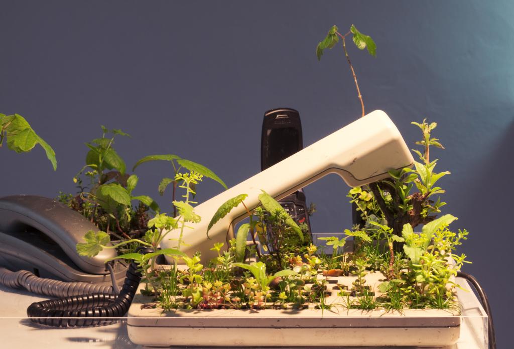 Téléphone Michel Blazy 2015 -téléphone, plantes, terre, eau