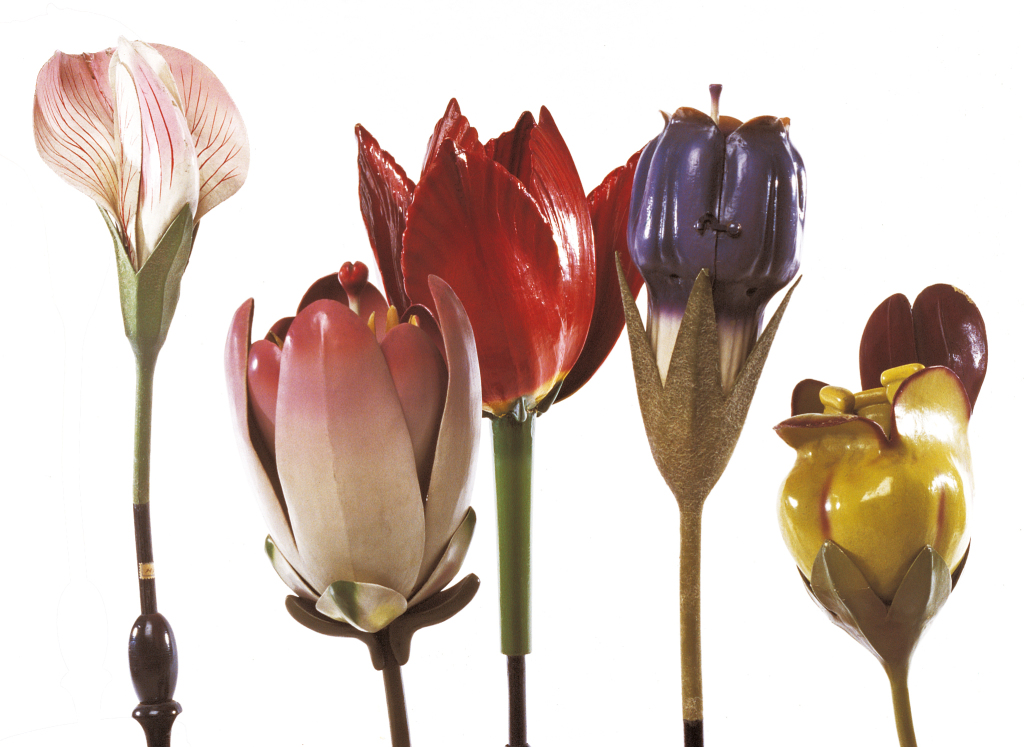 botanique - mode les agrandis de fleurs