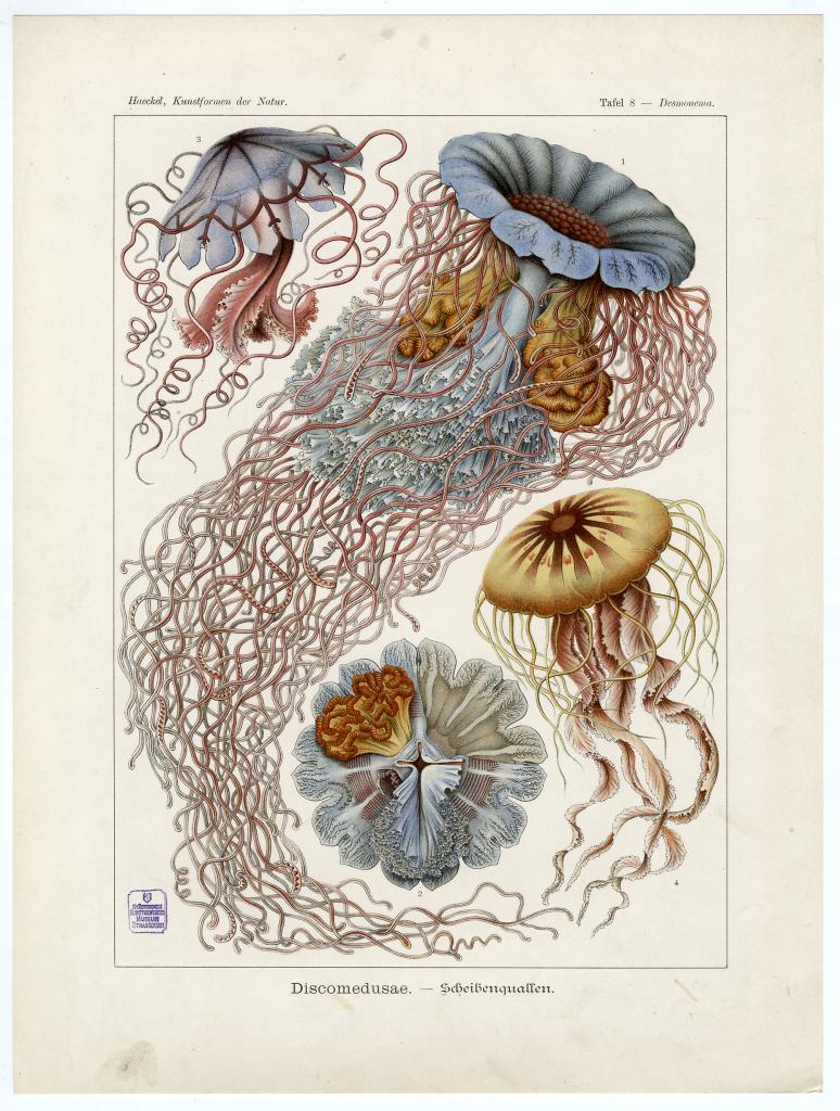 Haeckel_Kunstformen der Natur