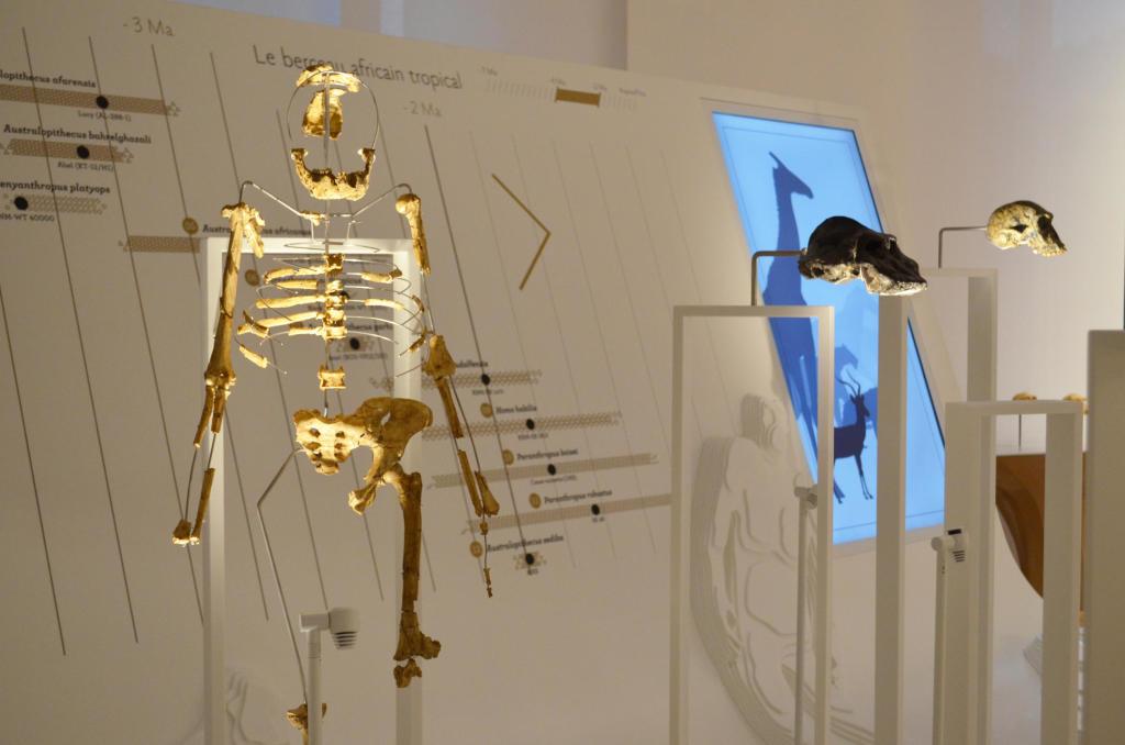 Exposition permanente, Musée de l'Homme