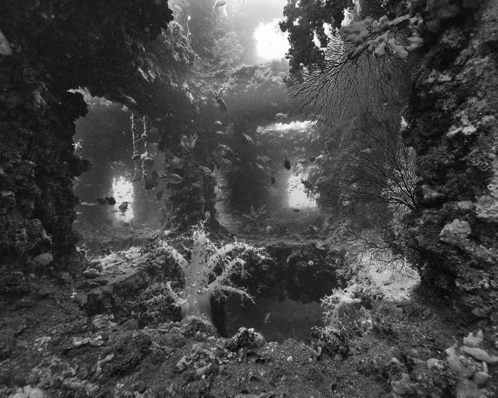 Nicolas Floc'h, Paysages productifs, macro-algues, - 23 m, Tateyama, Japon, 2013