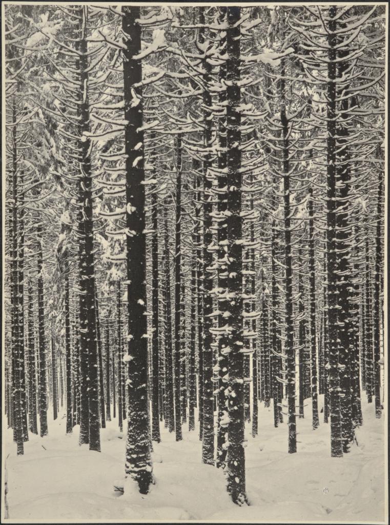 Albert Renger-Patzsch, Gebirgsforst im Winter (Fichtenwald im Winter), 1926