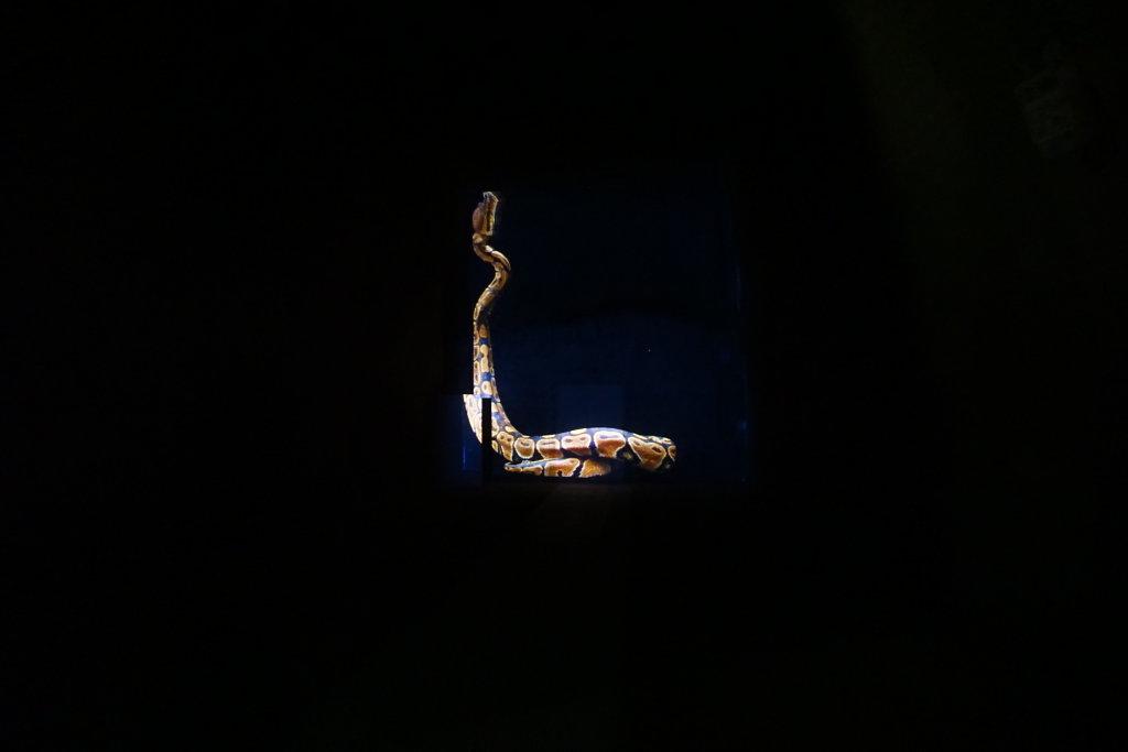 Bertrand Gadenne, Serpent