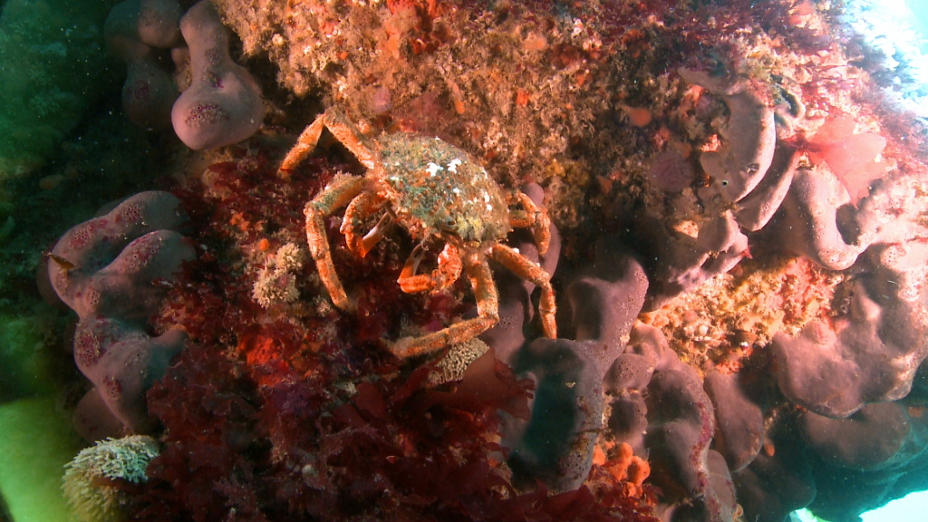 Exploration littorale - Araignée