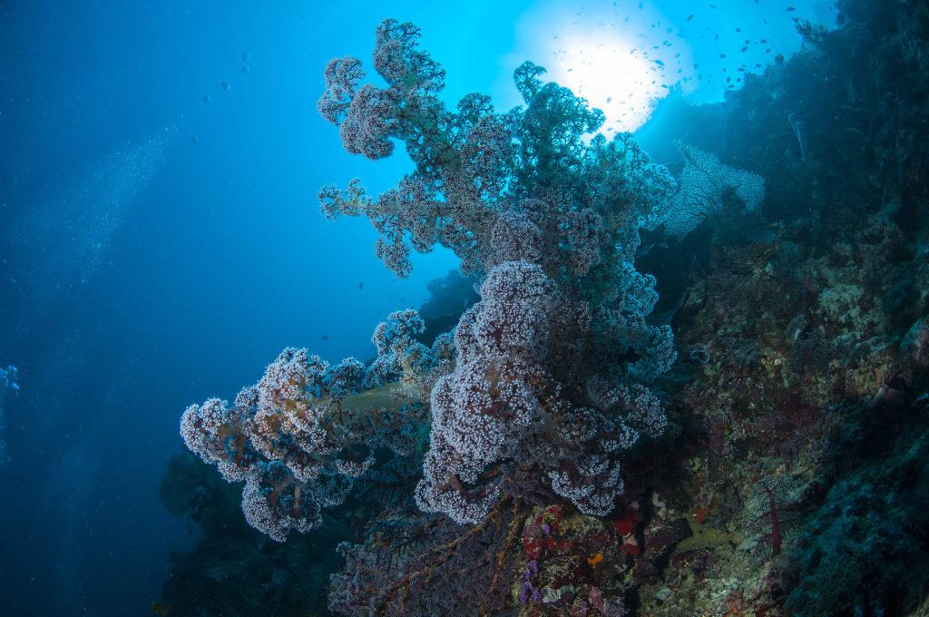 Exploration tropicale