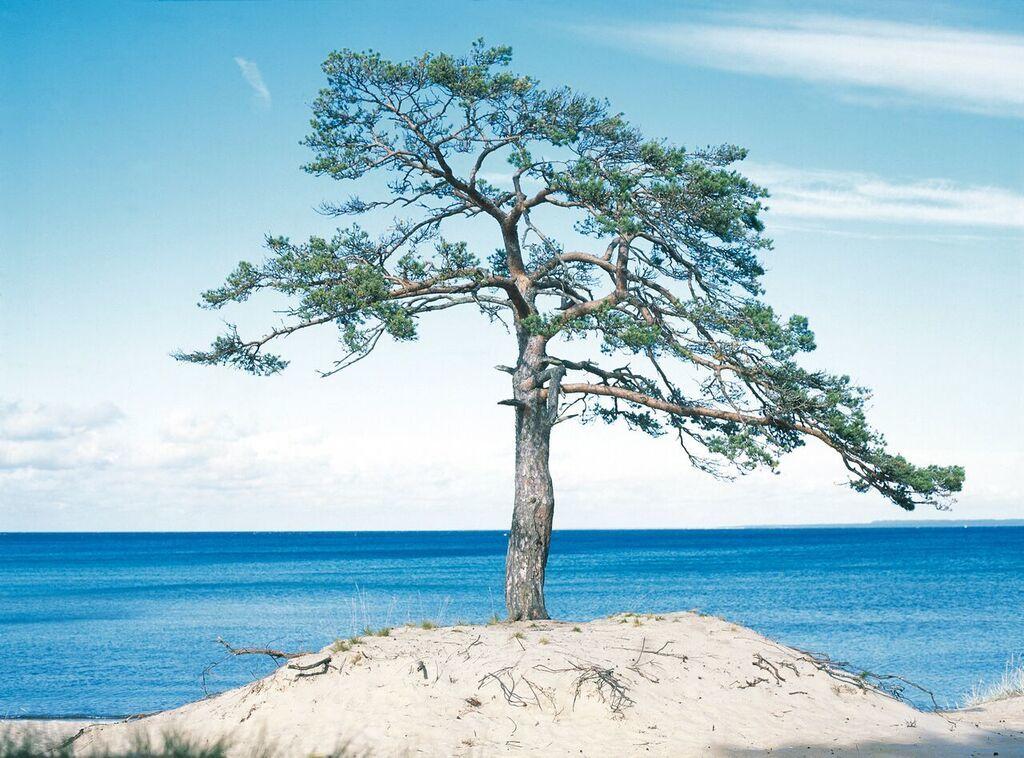 About Estonia Baltic Tree - Loov Kultuur à La Cité de la Mode et du Design