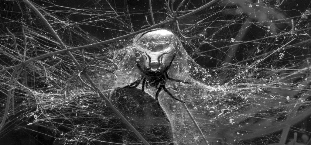 Spiders_underwater