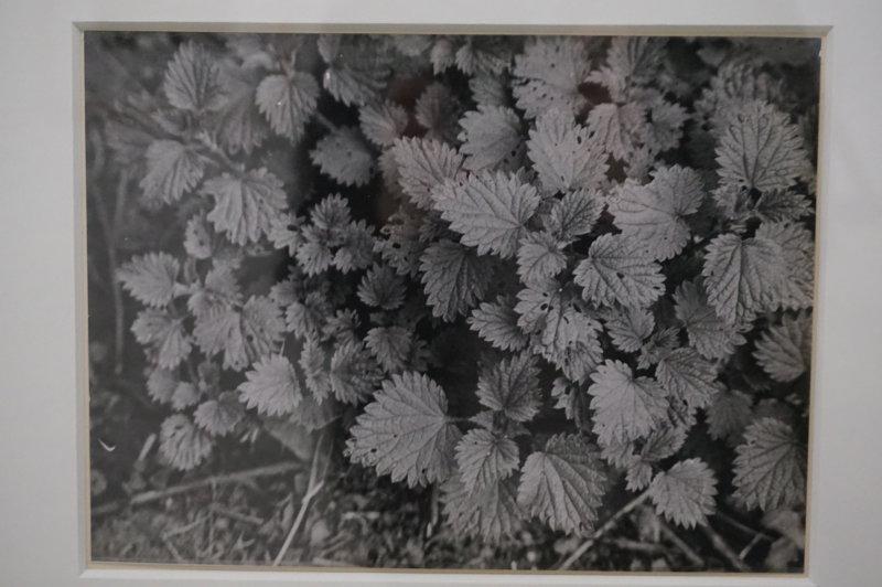 Vue de l'exposition Raoul Hausmann - Jeu de Paume (36)