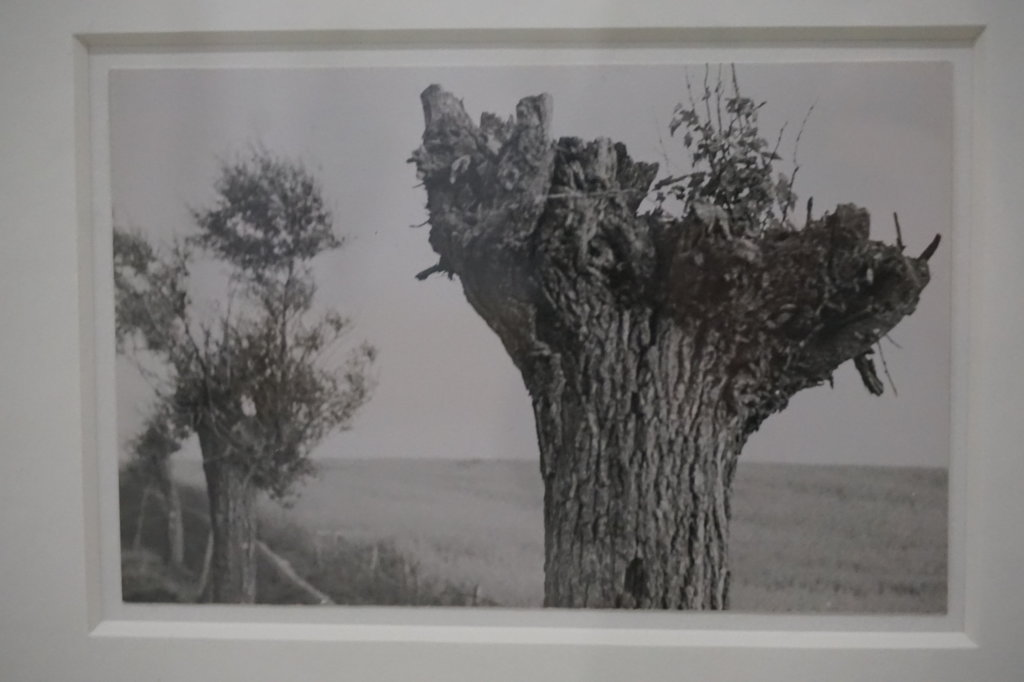 Vue de l'exposition Raoul Hausmann - Jeu de Paume (38)